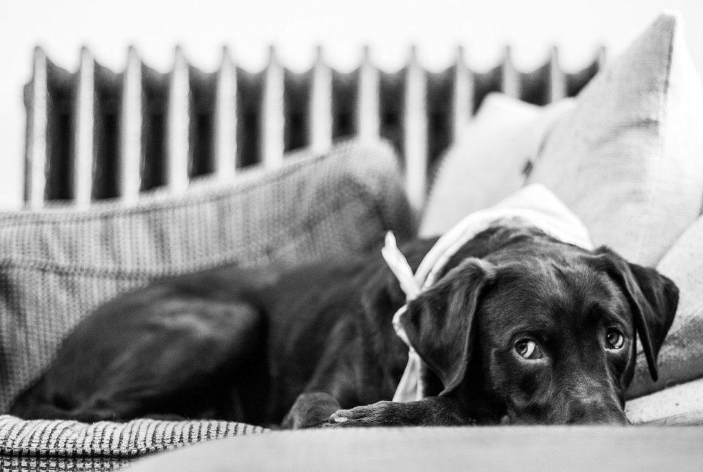 Un cane che fa gli occhi dolci