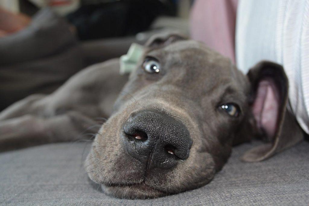 Il muso di un cane in primo piano
