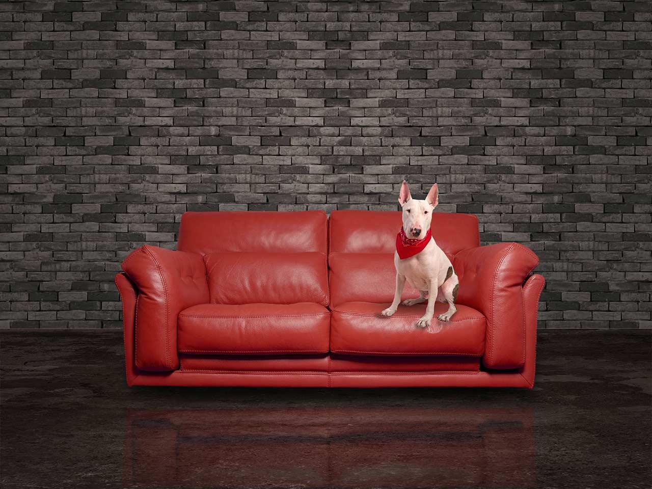 Un cane sopra un divano rosso in pelle